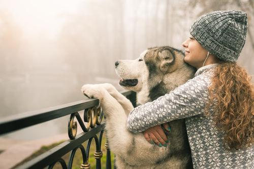 「愛犬に与えるレンコン」まとめ