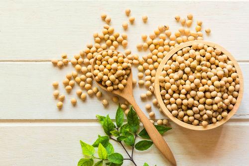 大豆に含まれる栄養素②「脂質」