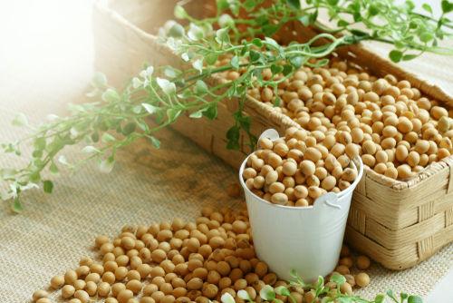 大豆に含まれる栄養素④「マグネシウム」