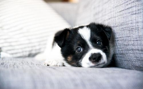 愛犬が「タマネギ中毒」になってしまった場合の症状は?