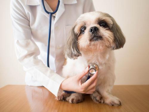 愛犬にたけのこを与える際には、シュウ酸の過剰摂取による結石に注意!