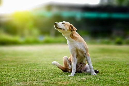 愛犬にタコを与えた場合、アレルギーは大丈夫?