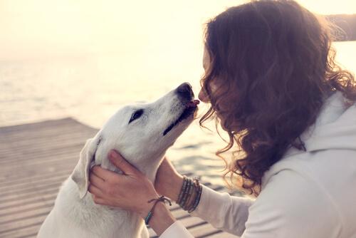 """なめる""""シチュエーション""""で犬の気持ちがわかる。犬がなめる、5つの理由"""