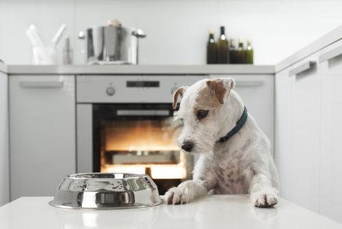 犬がレバーを食べても大丈夫!