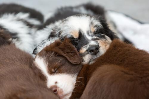 ドッグフードとは別で与えたい!犬の健康に良いとされる食べ物4選