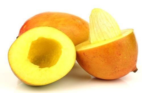 愛犬にマンゴーの「種」は与えても大丈夫?