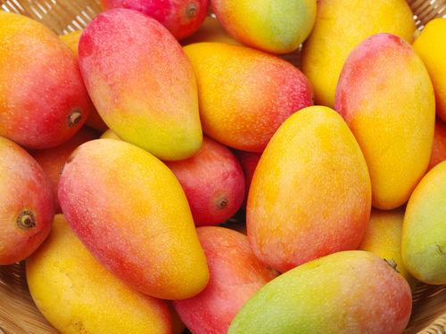 マンゴーを与える際の注意点①「過剰摂取」に注意!