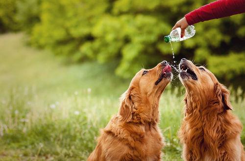 愛犬に与える「炭酸水」のまとめ