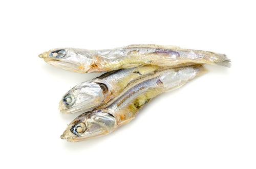 煮干しを与えるメリット②「イノシン酸」代表的な旨味成分