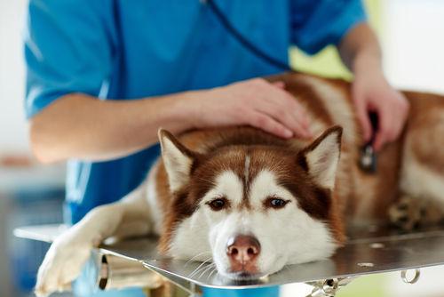 犬がネギを食べてしまった場合の対処法は?