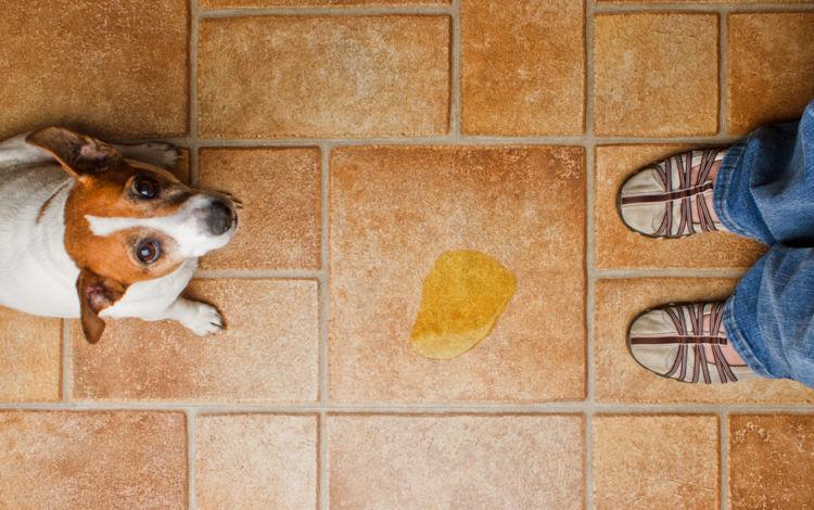 犬のおしっこ(尿)が臭い【こんな場合は要注意!】