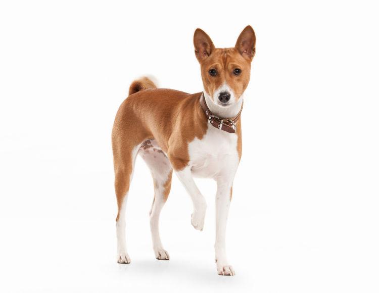 犬の変形性脊椎症