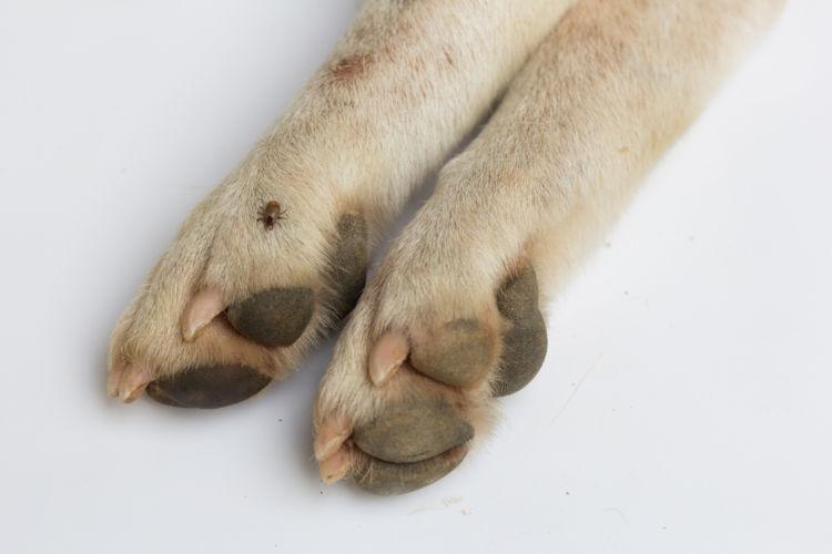 犬の足の爪から血が出ている【こんな場合は要注意!】