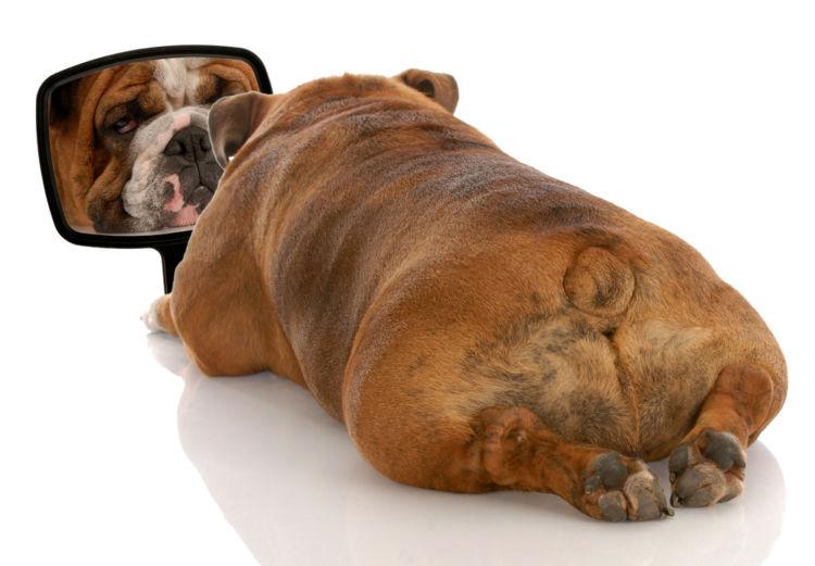 【獣医師監修】犬のおしりにしこり・できものがある。この症状から考えられる原因や病気は?