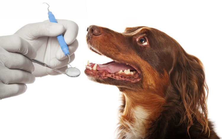 犬の歯が折れた(破折)【折れた歯は生え変わる?】