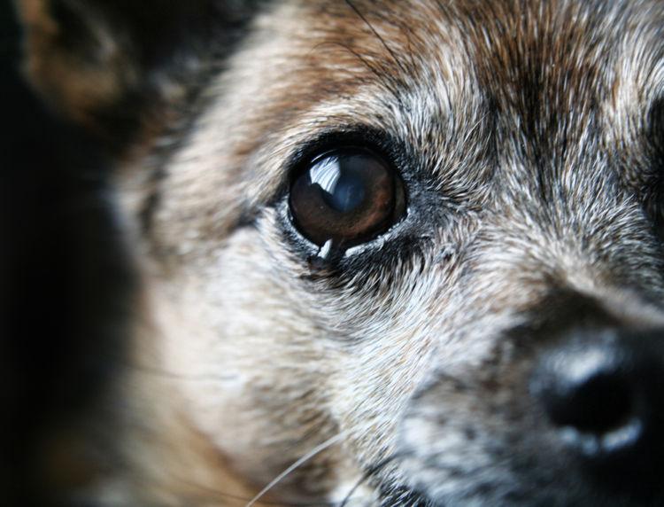 【獣医師監修】犬が涙を流している。この症状から考えられる原因や病気は?