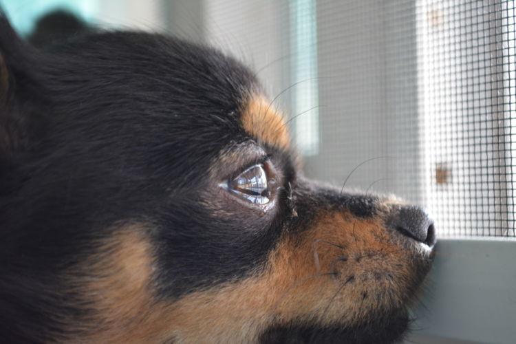犬が涙を流している【考えられる原因】