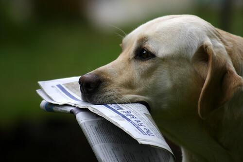 犬の嗅覚は人間の何倍?ただ強く感じるわけじゃない、知られざるにおいの世界