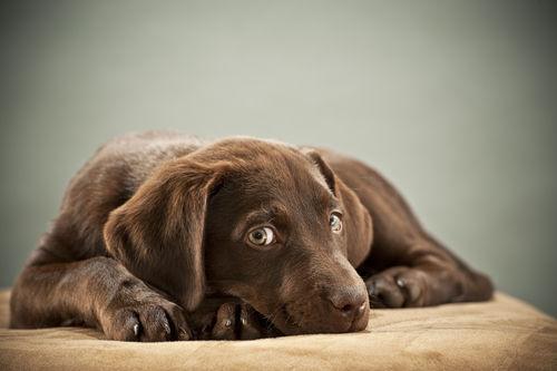 犬が食べると中毒やアレルギーを引き起こす危険な食べ物!