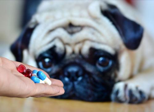 犬にとって「医薬品(薬)」は毒性があるので注意!