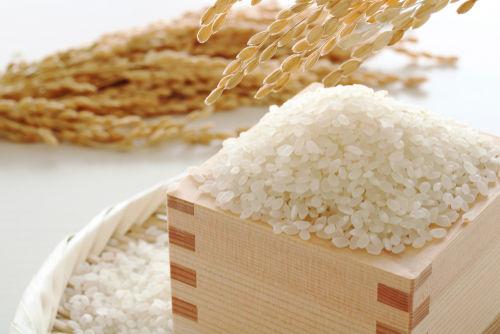【獣医師監修】愛犬がお米を食べても大丈夫?与えて良いお米の種類やアレルギーは?