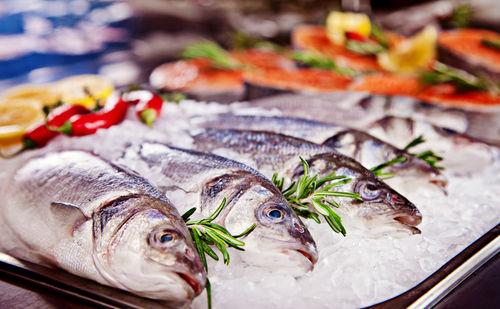 犬に与える「魚」の栄養素とメリット!