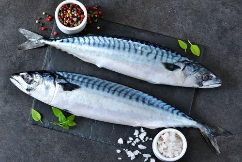 【獣医師監修】犬に鯖を食べさせても大丈夫?中毒や骨、鮮度や過剰摂取に注意!魚の注意点!