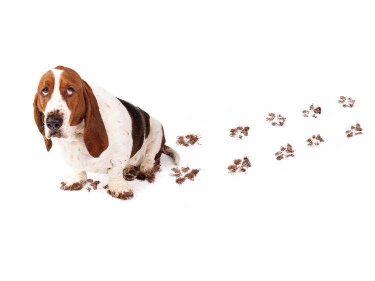 【獣医師監修】犬が足を引きずる。考えられる原因や症状、おもな病気は?