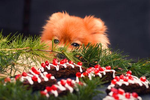 犬がチョコレートを食べても大丈夫?中毒症状の原因は?