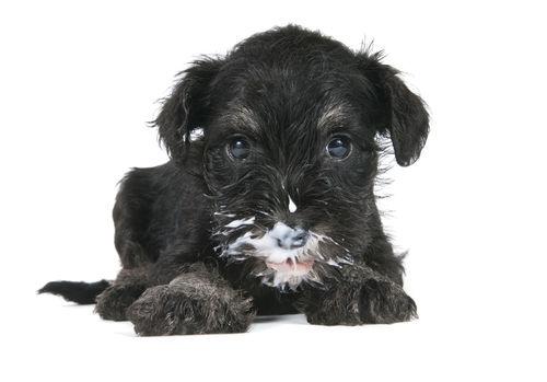 犬がヨーグルトを食べても大丈夫!