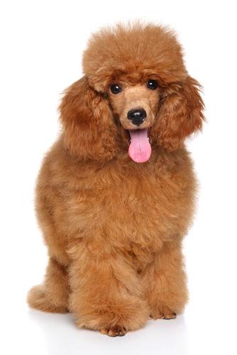 小型犬(6~10㎏)