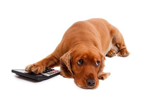 【計算式】犬の「安静時」エネルギー必要量(RER)
