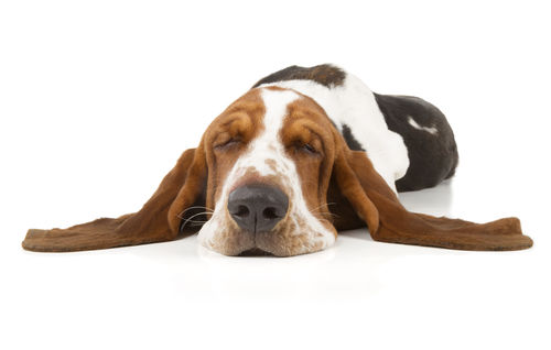 愛犬が塩分不足になってしまった場合の症状とは?