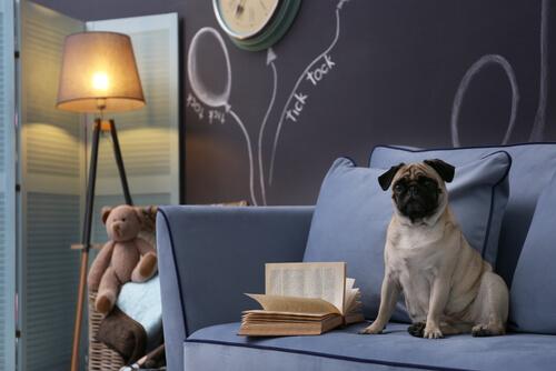 犬の留守番、照明やテレビは付けたままでいい?