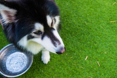 【獣医師監修】犬が水を飲まない。考えられる原因や対処法は?