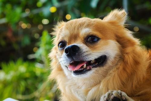 【獣医師監修】犬の口のまわりが腫れている。この症状から考えられる原因や病気は?