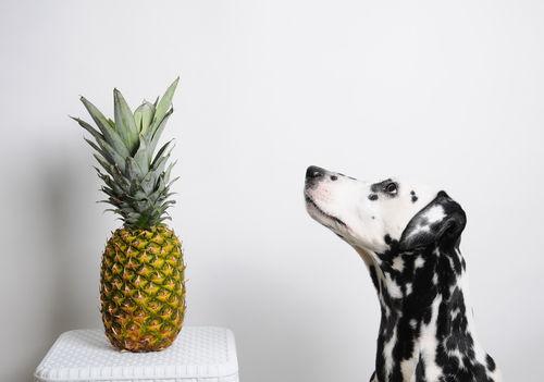 食べて大丈夫な果物④「パイナップル」