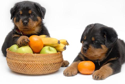 犬に与える「果物」のまとめ