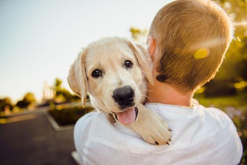 愛犬の健康を守れるのは、飼い主だけ