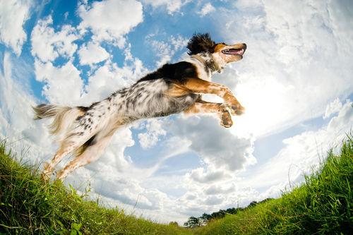 成長期の犬にとって、豆乳のたんぱく質は特に重要な栄養素!?