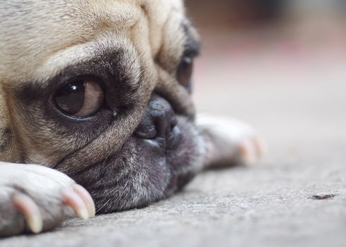 食欲を抑制しにくい犬