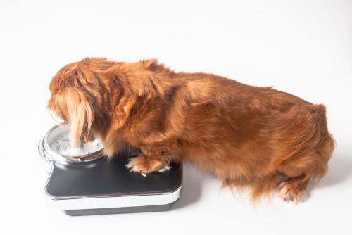犬のチーズの食べ過ぎ、肥満に注意!