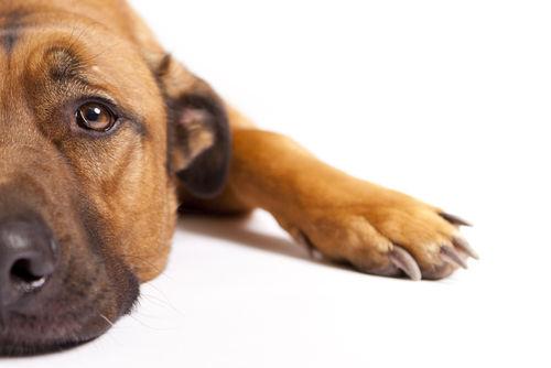 人間用のお菓子を食べた際の犬の肥満リスク①【関節炎】