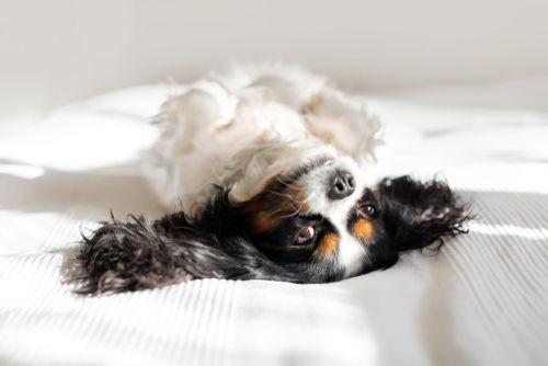 人間用のお菓子を食べた際の犬の肥満リスク④【便秘】