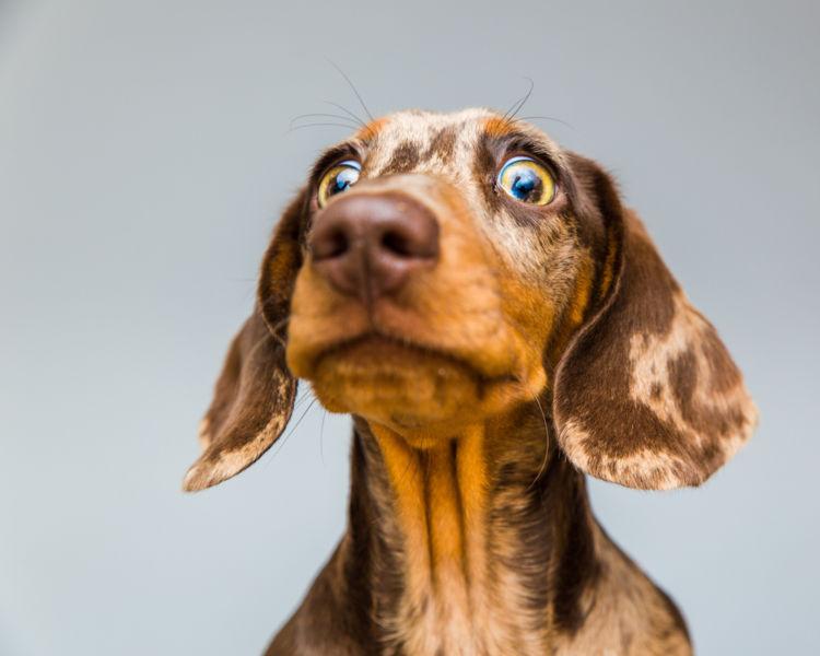 犬の目が飛び出てくる【こんな症状は要注意!】
