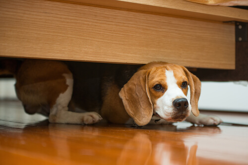 犬がご飯を隠そうとする、あの不思議な行動に隠された理由とは?