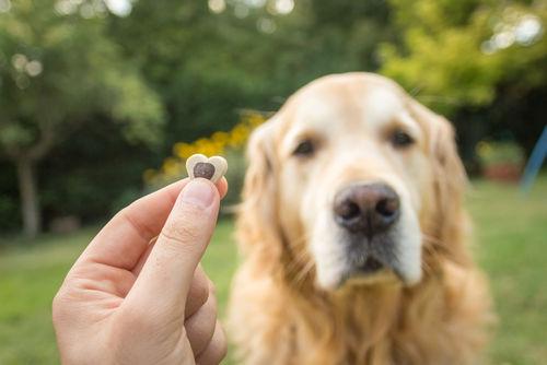 歯が弱い犬にもあげられるクッキー