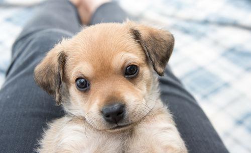 愛犬用の手作りご飯 ポイント③「愛犬の様子に注意!」