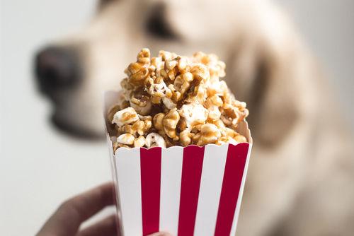 【なぜ?】愛犬の肉球からポップコーンの香ばしい甘い匂いがする3つの理由とは!?