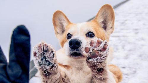愛犬の足のトラブル「ひび割れ」「あかぎれ」に注意!